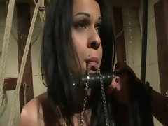 Lez domina makes her slave suck toy cock